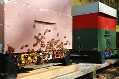 Primer de la colmena con muchas abejas en la entrada Foto de archivo libre de regalías
