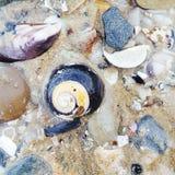 Primer de la concha marina imagenes de archivo