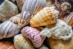 Primer de la concha marina colorida Fotografía de archivo libre de regalías