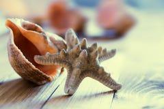 Primer de la concha marina de las estrellas de mar en el viejo tablero de madera Imagen de archivo