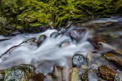 Primer de la corriente en el bosque de Tollymore Foto de archivo