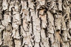 Primer de la corteza de árbol Fotografía de archivo