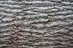Primer de la corteza de árbol Imagen de archivo libre de regalías