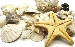 Primer de la estación de verano de los crustáceos de la cáscara de las estrellas de mar de la concha marina Imagen de archivo