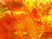 Primer de la flor Foto de archivo libre de regalías