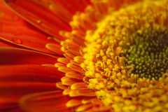 Primer de la flor Fotografía de archivo libre de regalías