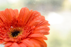 Primer de la flor Imagen de archivo