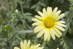 Primer de la flor Fotos de archivo libres de regalías
