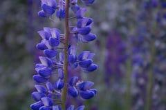 Primer de la flor Caminar aventura en el cl de San Carlos de Barilochein Foto de archivo libre de regalías