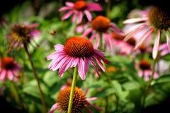 Primer de la flor con la abeja que zumba en fondo Foto de archivo