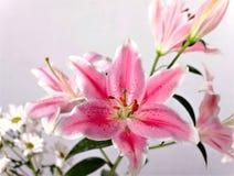 Primer de la flor de Lilly Imágenes de archivo libres de regalías