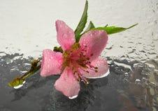 Primer de la flor rosada Imagen de archivo