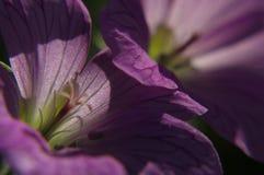 Primer de la flor rosada fotografía de archivo