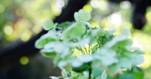 Primer de la flora en jardín metrajes