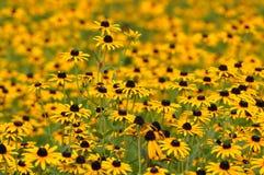 Primer de la floración amarilla de las flores fotografía de archivo