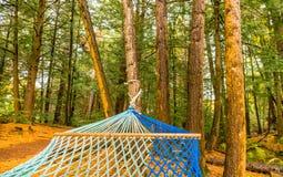 Primer de la hamaca brillantemente coloreada en el bosque del otoño, w de la cuerda imágenes de archivo libres de regalías