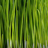 Primer de la hierba Fotos de archivo