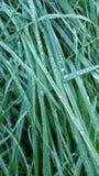 Primer de la hierba Foto de archivo libre de regalías