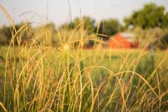 Primer de la hierba con el granero en fondo foto de archivo libre de regalías