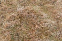 Primer de la hierba seca Foto de archivo