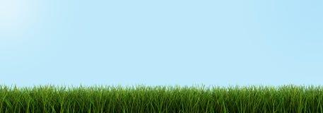 Primer de la hierba (trayectoria de recortes incluida) Foto de archivo