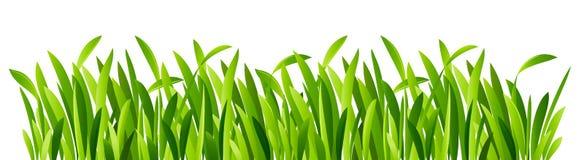 Primer de la hierba verde stock de ilustración
