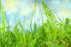 Primer de la hierba verde en el fondo del cielo azul, paisaje del verano fotografía de archivo libre de regalías