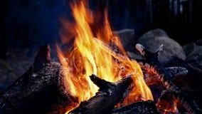 Primer de la hoguera de la hoguera ardiendo en la noche con las ascuas calientes y los carbones rojos metrajes