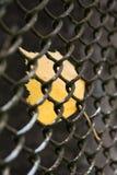 Primer de la hoja amarilla en cerca Foto de archivo libre de regalías