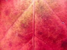 Primer de la hoja cambiante del color imágenes de archivo libres de regalías