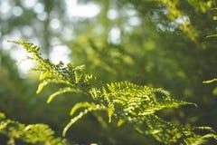 Primer de la hoja del helecho en el sol fondo verde con el cielo azul imagen de archivo libre de regalías