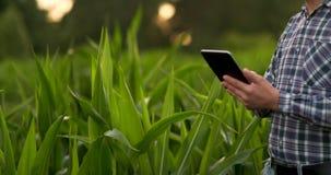 Primer de la llamarada de la lente: las manos del granjero que sostienen la tableta y que tocan y que examinan las hojas en campo almacen de video