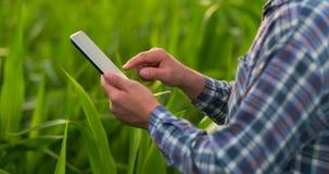 Primer de la llamarada de la lente: las manos del granjero que sostienen la tableta y que tocan y que examinan las hojas en campo almacen de metraje de vídeo