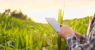 Primer de la llamarada de la lente: la mano del granjero toca las hojas del maíz en el campo en la puesta del sol y comprueba la  metrajes