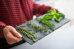Primer de la mano de la mujer que sostiene la pizarra de hierbas frescas Fotografía de archivo libre de regalías