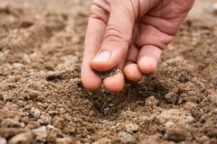 Primer de la mano que planta las semillas en suelo Fotografía de archivo libre de regalías
