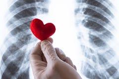 Primer de la mano de un médico Un doctor o un ayudante de laboratorio en un guante blanco lleva a cabo un corazón rojo del recuer imagenes de archivo