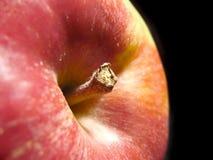 Primer de la manzana Fotografía de archivo