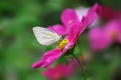 Primer de la mariposa Fotos de archivo libres de regalías