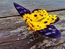Primer de la mariposa Foto de archivo libre de regalías