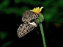 Primer de la mariposa Fotos de archivo