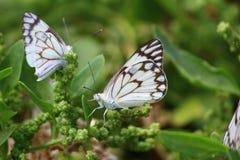 Primer de la mariposa en la planta imagen de archivo libre de regalías