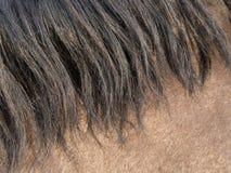 Primer de la melena del caballo Foto de archivo