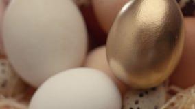 Primer de la mezcla de diversos huevos almacen de video