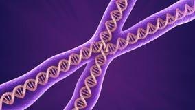Primer de la molécula del cromosoma, stock de ilustración