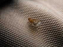 Primer de la mosca en el material Imagen de archivo