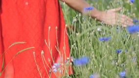 Primer de la mujer de la mano roja del vestido adentro que corre a través de campo de las amapolas La mano de la muchacha que toc almacen de metraje de vídeo