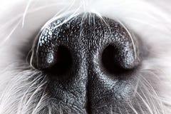 Primer de la nariz de perro imágenes de archivo libres de regalías