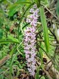 Primer de la orquídea Fotografía de archivo libre de regalías