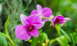 Primer de la orquídea Imagen de archivo libre de regalías